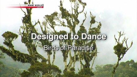 NHK Wildlife - Designed to Dance: Birds of Paradise (2011)