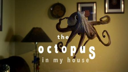 BBC - Natural World: The Octopus in My House (2019)