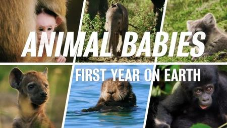 BBC - Animal Babies: First Year on Earth (2019)