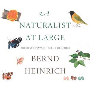 «A Naturalist at Large: The Best Essays of Bernd Heinrich» by Bernd Heinrich