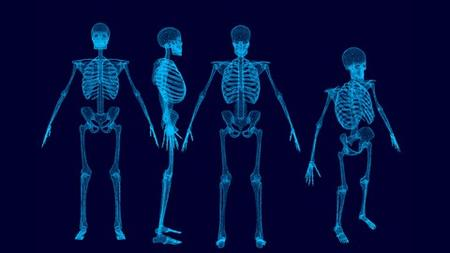 Human Musculo-Skeletal System- Part 2- lower limb