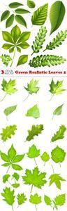 Vectors - Green Realistic Leaves 2