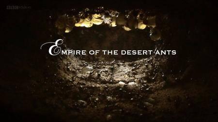 BBC Natural World - Empire of the Desert Ants (2011)