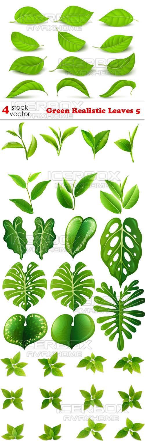 Vectors - Green Realistic Leaves 5