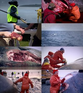 Channel 4 - Inside Natures Giants: Sperm Whale (2011)