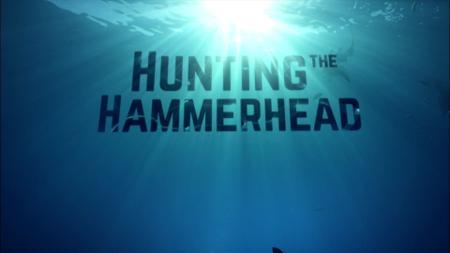 Hunting the Hammerhead (2015)