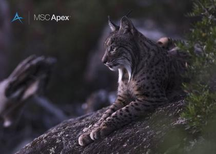 MSC Apex Iberian Lynx Feature Pack 2 with Documentation