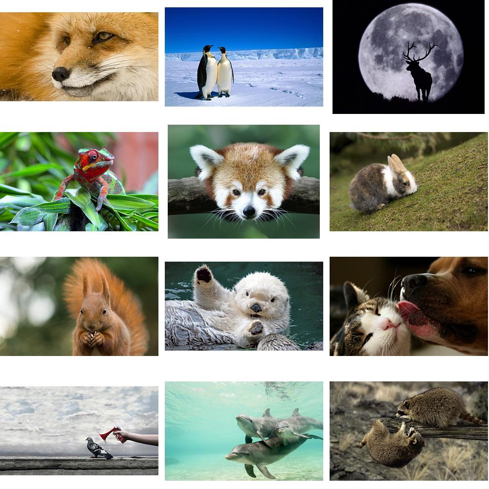 Wallpapers Animals. Set 21