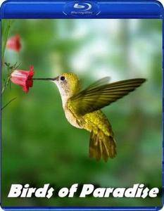 BBC Earth Natural World - Birds of Paradise (2010)