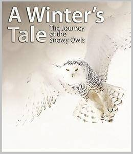 AlbatrossFilms - A Winter's Tale: The Journey of the Snowy Owls (2015)