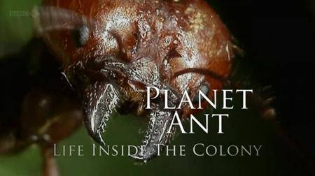 BBC - Planet Ant: Life Inside the Colony (2013) [repost]