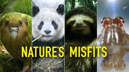 BBC Natural World - Nature's Misfits (2014)
