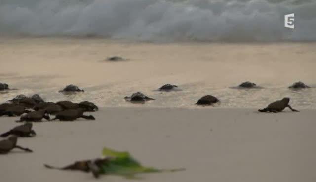 (Fr5) Sous le signe de la tortue (2011)