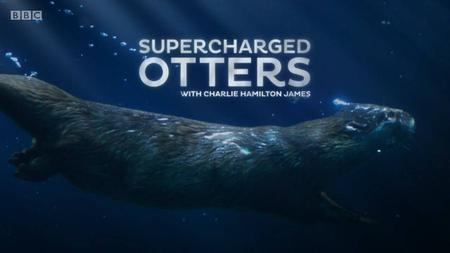 BBC - Natural World: Supercharged Otters (2017)