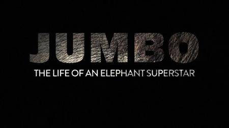 CBC The Nature Of Things - Jumbo: The Life Of An Elephant Superstar (2018)