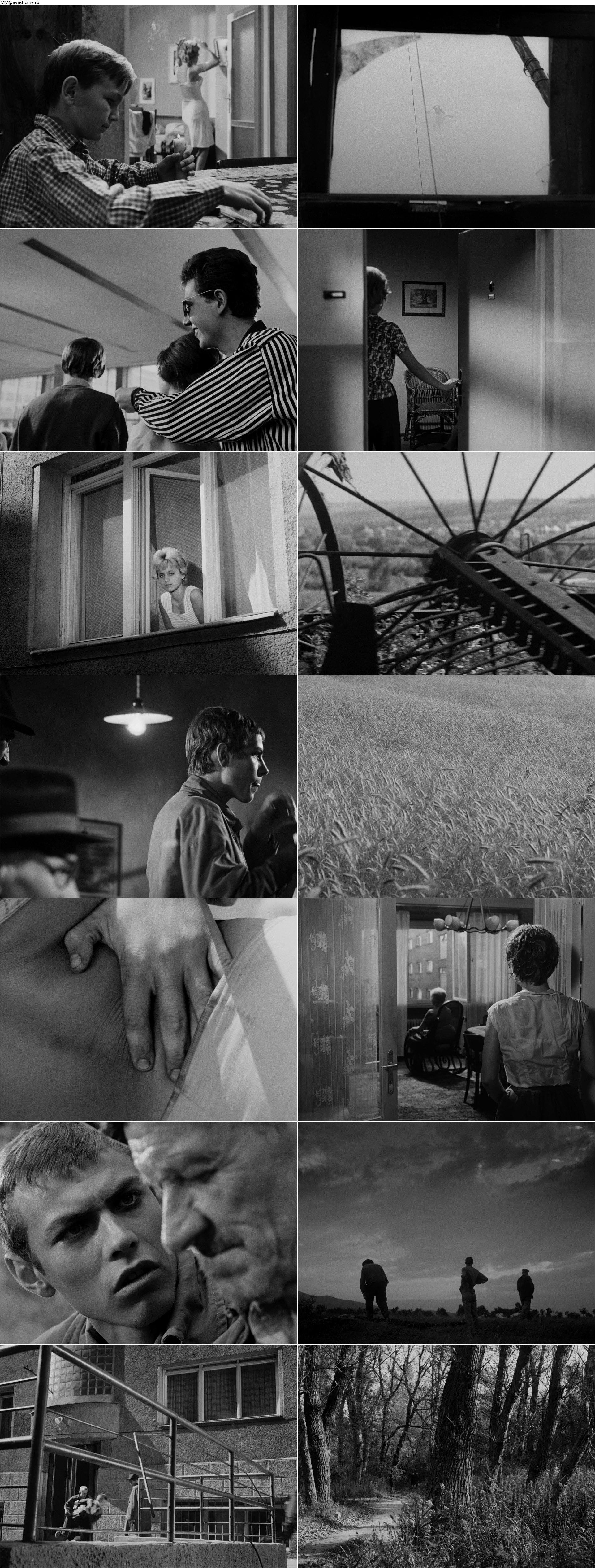 The Sun in a Net (1962) Slnko v sieti