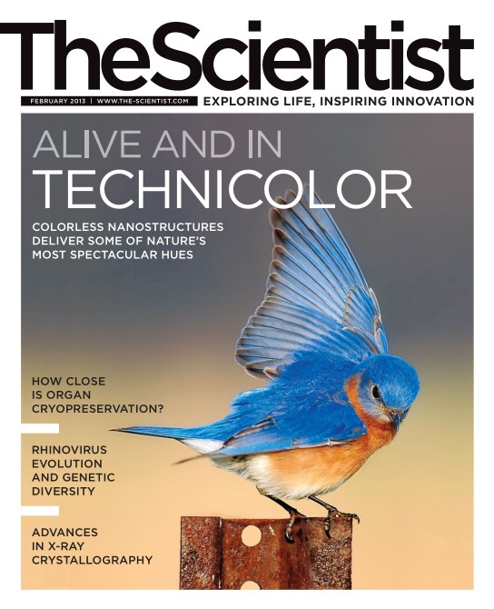 The Scientist - February 2013
