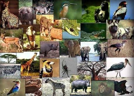 1600 High Resolution Photographs of Animal
