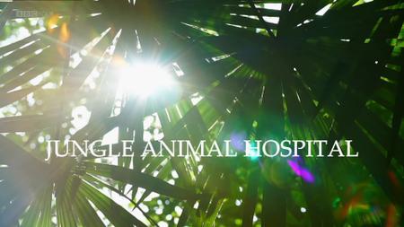 BBC - Natural World: Jungle Animal Hospital (2016)