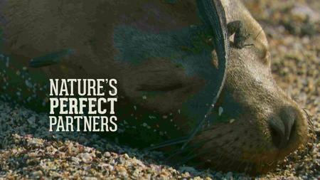 BBC - Natural World: Nature's Perfect Partners (2016)