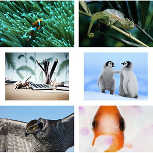Wallpapers Animals. Set 15
