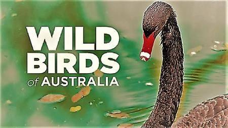 Smithsonian Earth - Wild Birds of Australia: Series 1 (2017)