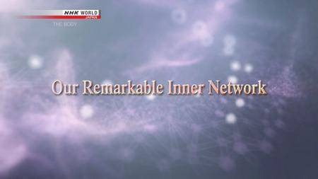 NHK Documentary - THE BODY: Our Remarkable Inner Network (2018)