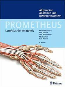 Allgemeine Anatomie und Bewegungssystem