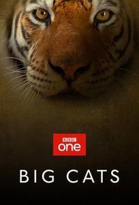 Big Cats S01E01