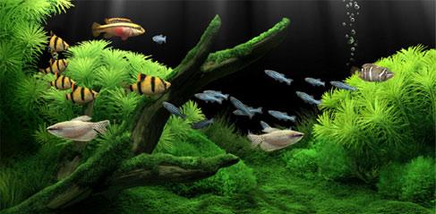 Dream Aquarium Screensaver 0.9994 Cracked