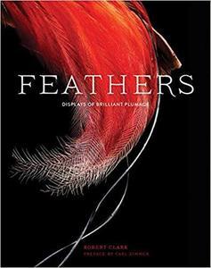 Feathers Displays of Brilliant Plumage