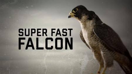 BBC - Natural World: Super Fast Falcon (2018)