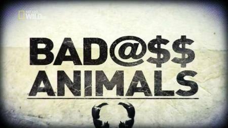 National Geographic - Badass Animals (2013)