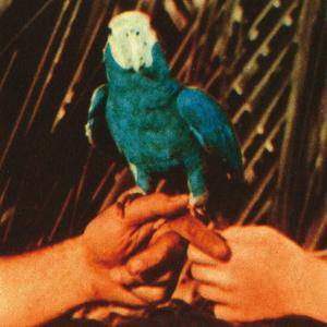 Andrew Bird - Are You Serious (2016)