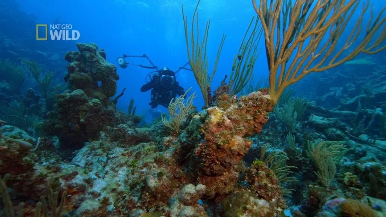 National Geographic - Sea of Hope: America's Underwater Treasures (2017)