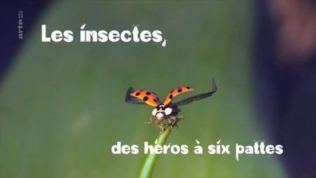 (Arte) Les insectes, des héros à six pattes (2017)