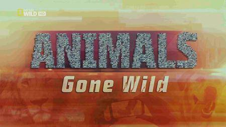 National Geographic - Animals Gone Wild: Double Trouble (2016)