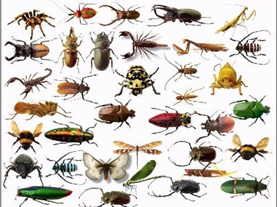 Insects - Clipart for Photoshop