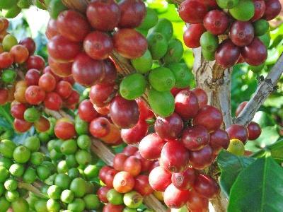 Photos Coffee Brazil