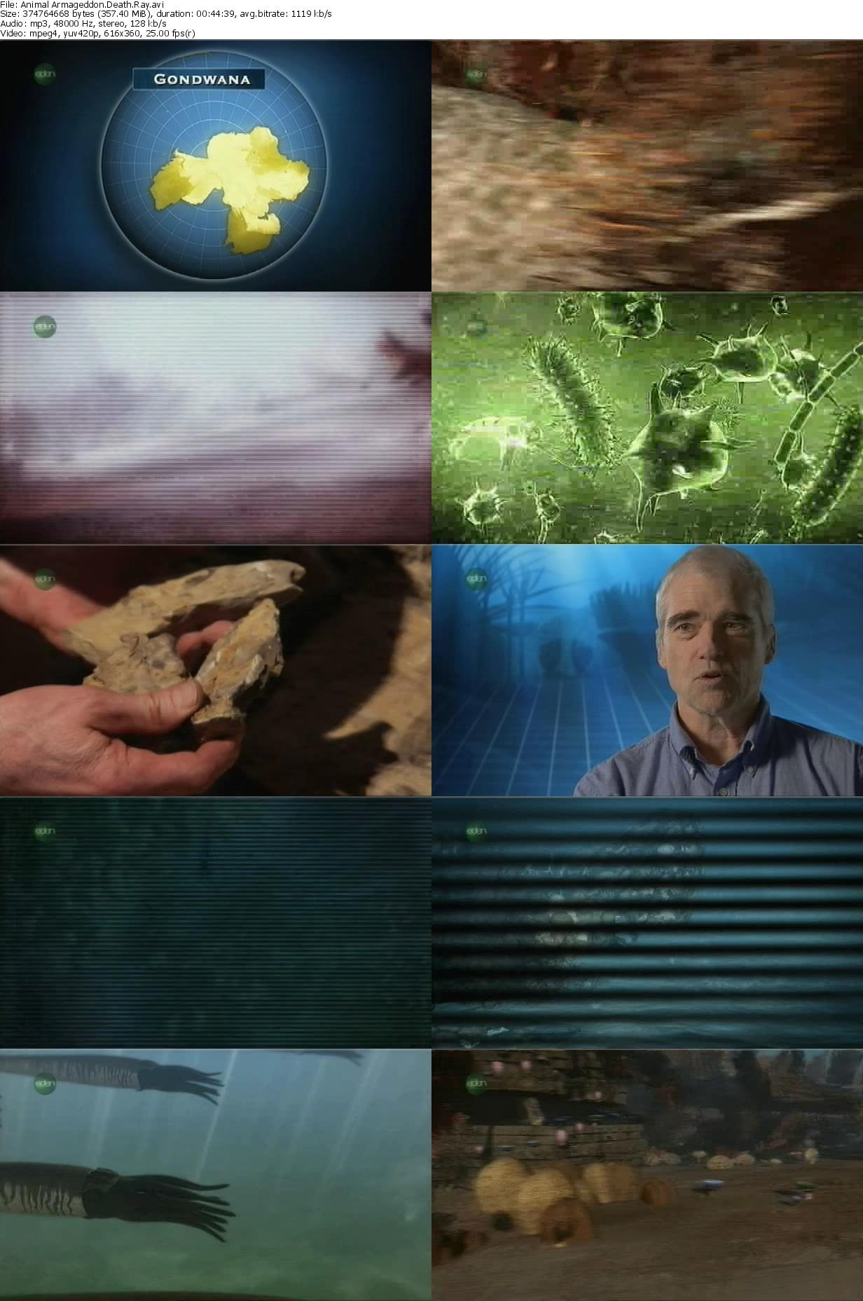 Animal Armageddon S01E01 Death Rays (2009)