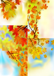 Beautiful Maple Leaf Background