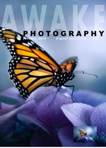 Awake Photography - January 2019
