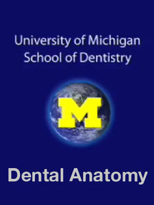 University of Michigan: School of Dentistry - Dental Anatomy