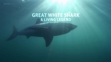 BBC - Natural World: Great White Shark - A Living Legend (2009)