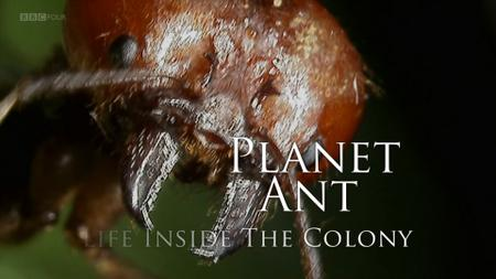 BBC - Planet Ant: Life Inside the Colony (2013)