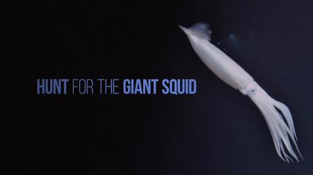 NG. - Hunt For The Giant Squid (2019)
