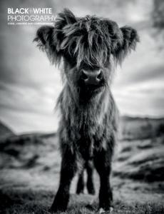Black + White Photography - Autumn 2020