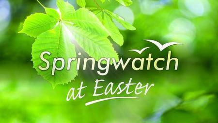 BBC - Springwatch at Easter (2016)