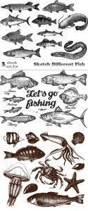 Vectors - Sketch Different Fish