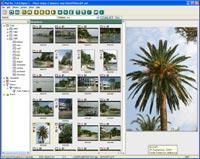 BR Software PixFiler v5.0.11